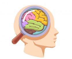 Mózg Co Tam Jest